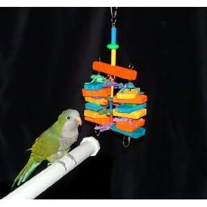 Surfs Up Quaker / Conure Bird Toy (Sophomore): Pet
