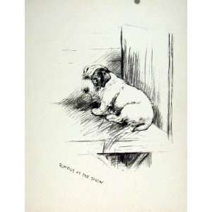 Show Day Dog Pencil Sketch Fine Art Old Drawing C1936 Home & Kitchen