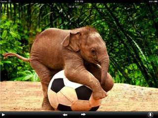 Elephants Wallpapers HD para iPad na iTunes App Store