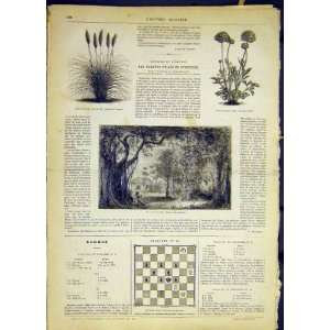 Flora Fauna Plants Vanilla French Print 1868
