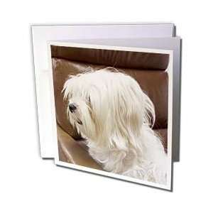 Jackie Popp Wildlife N Nature dogs   white dog   Greeting