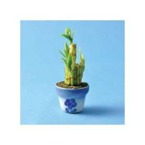 Topics related to meaning of lucky bamboo plant