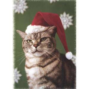 Coon Cat Boxed Christmas Cards Santa Cat Health & Personal Care