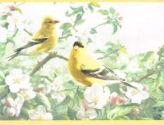 EASTERN BLUE BIRD, CARDINAL PLUS FINCH COUNTRY Yellow Edge Wallpaper
