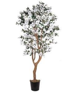 foot Dogwood Silk Tree