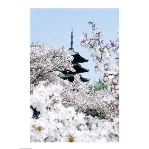 Cherry Blossom trees Poster Print