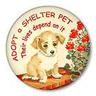 Dogs Animal Rescue Boston Terrier Adopt Shelter Pets